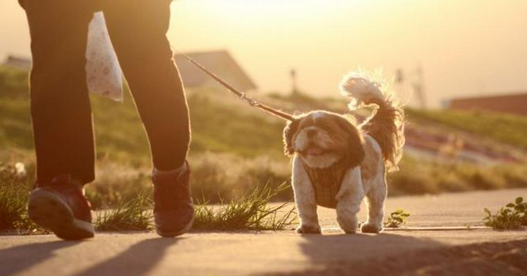 愛犬を守る災害対策 一緒に避難することを考えて必要なしつけと持ち物を紹介