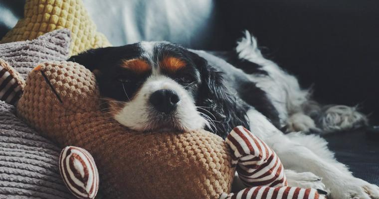 犬のおもちゃオススメ11選|ボールや音が鳴るタイプなど♪