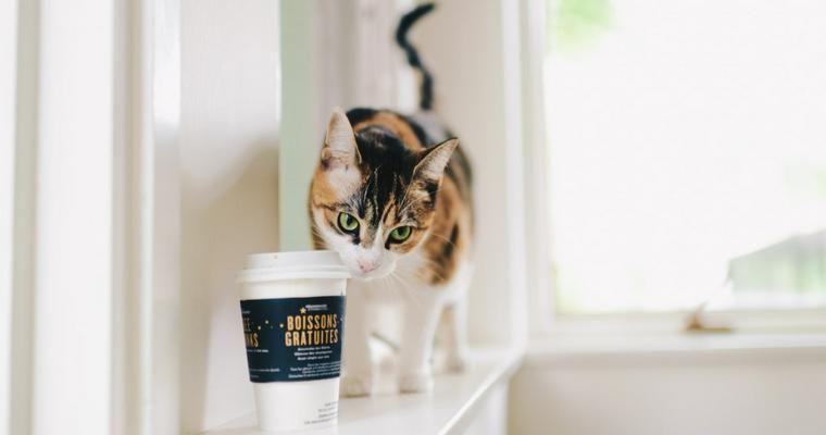 猫にコーヒーは危険 カフェイン中毒の症状や致死量、応急処置を解説