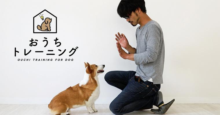 犬に待てを覚えさせたい! 今日から実践できる教え方を動画でご紹介【トレーナー解説】