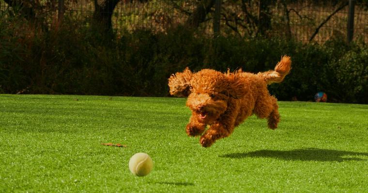 ターゲットトレーニングで犬のしつけをおこなう方法とは