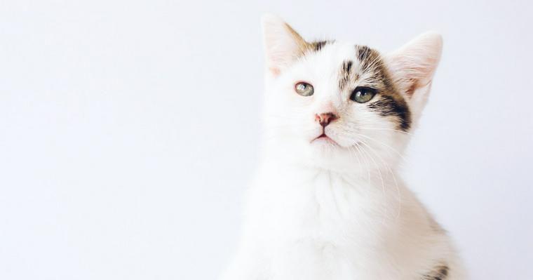 猫は避妊・去勢すべき? 手術の時期や方法などを獣医師が解説