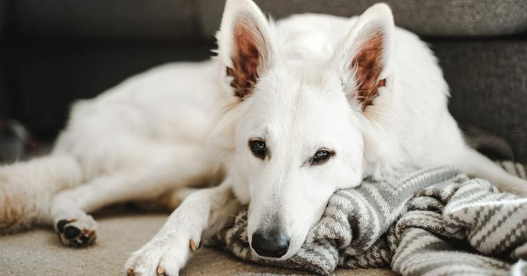 犬の麻酔リスクとは? 全身麻酔・鎮静と局所麻酔の違いなどを獣医師が解説