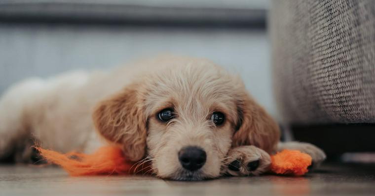 【獣医師執筆】犬のワクチンの種類や副作用などを解説