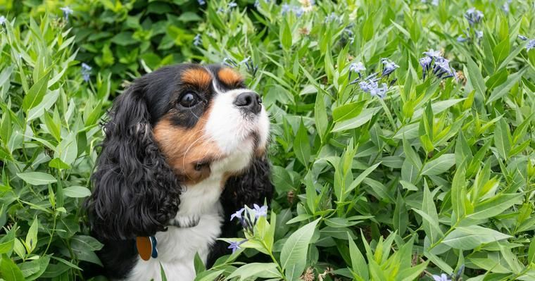 【獣医師監修】犬が蜂に刺されたときの症状や対処法を紹介
