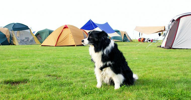 関東・関西の犬と行けるキャンプ場!おすすめテント、グッズを紹介