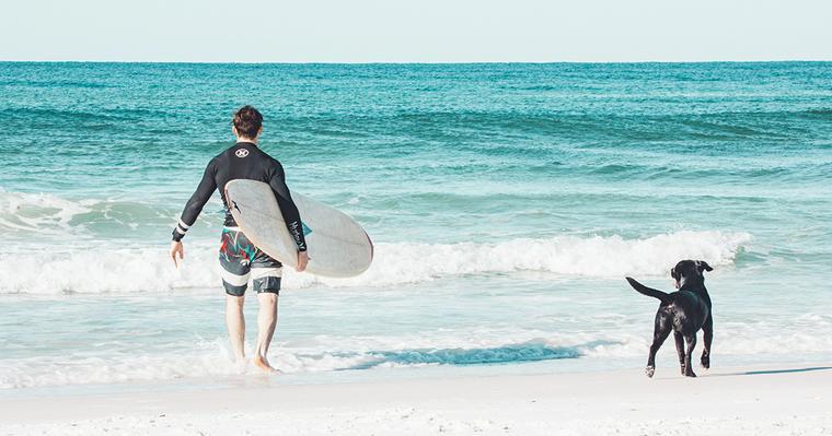愛犬と一緒に海へ行こう! 散歩や泳ぐ際の注意点、関東などの海水浴スポットを紹介