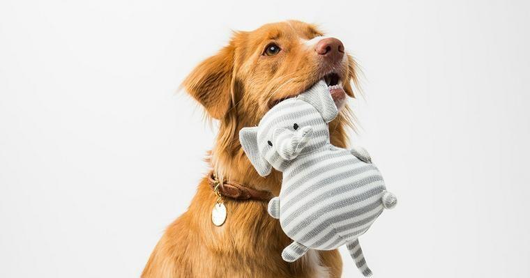 犬のおもちゃ、洗ってますか? 放っておくと細菌だらけに!