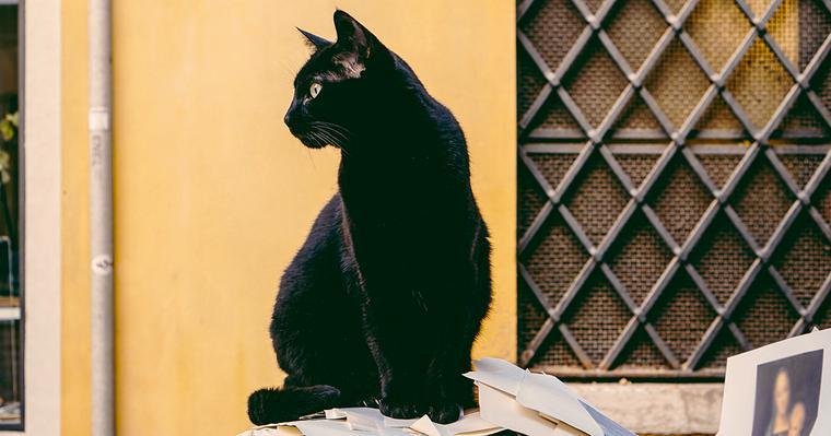 「黒猫感謝の日」はなぜ始まった? 一匹の黒猫と一人の愛猫家の愛から広まった特別な日