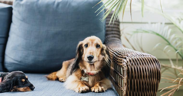 ドイツやフランス、イギリスなどヨーロッパ原産の犬種を紹介