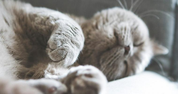 抜け毛が少ない猫の種類を紹介 アレルギー持ちの人も大丈夫って本当?