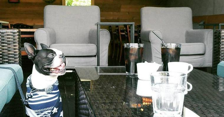 埼玉県の犬同伴可おすすめドッグカフェ&レストラン14選