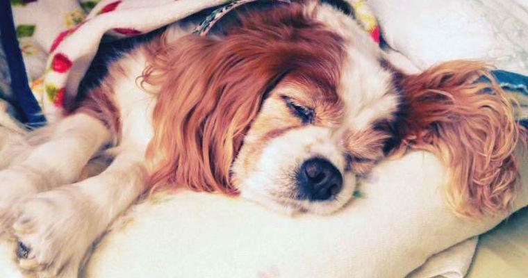 老犬に多い病気・症状とは? 健康診断や準備の必要性を獣医師が解説