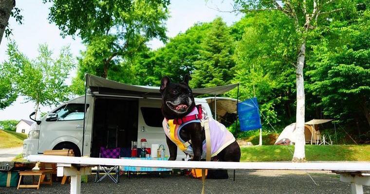 愛犬とキャンピングカーで旅行しよう♪ 人気のハイエースやバンコンなどタイプ別メリット・デメリット