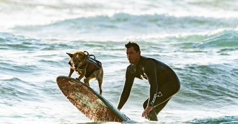 愛犬と波乗りしよう! ドッグサーフィンの楽しみ方、注意点を解説