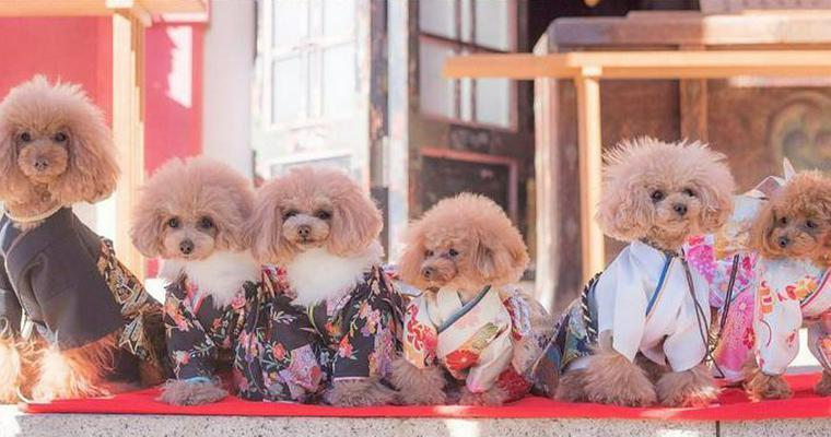 犬の七五三はいつ? おしゃれな着物やお参りできる東京、座間など関東の神社を紹介