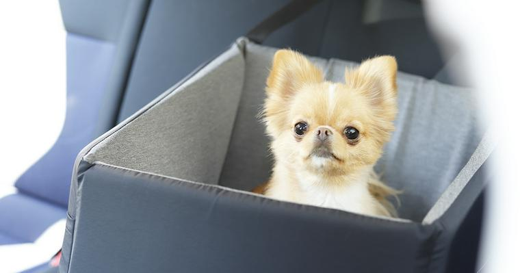 犬と車でお出かけしよう。乗せ方や注意点、クレートなどのおすすめグッズを紹介