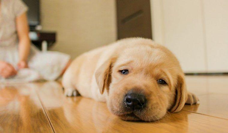 犬の嘔吐の原因や対処法 繰り返すなど病院に行くべき症状を獣医が解説
