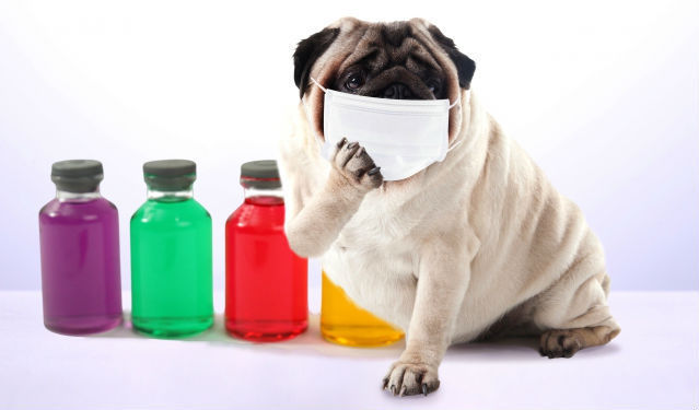 犬もインフルエンザになる? 人からうつる可能性や症状、予防法を獣医師が解説