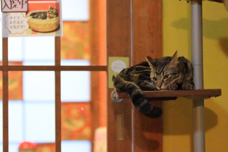 【猫の写真の撮り方】ケニアドイさんが教える「猫の目線」と「ズーム」の生かし方