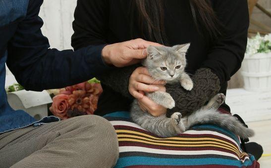 猫がなつく7つの方法|しぐさや行動の理由、なつく猫の種類まで紹介