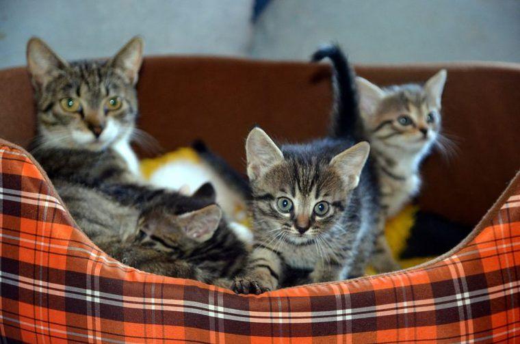 一人暮らしで猫を飼って後悔する前に! 費用や飼い方の注意点を解説