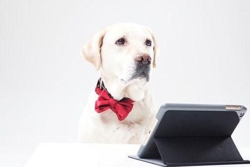 犬映画おすすめ24選|感動ものからコメディー、アニメまで紹介