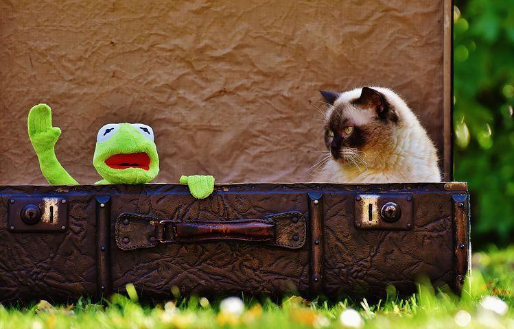 猫映画オススメ15選! 感動ものからコメディーまで猫好きスタッフが厳選