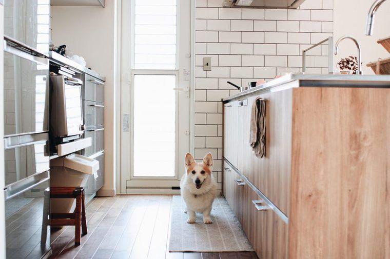 【犬との暮らし】キッチンに居座る犬たちの生活風景
