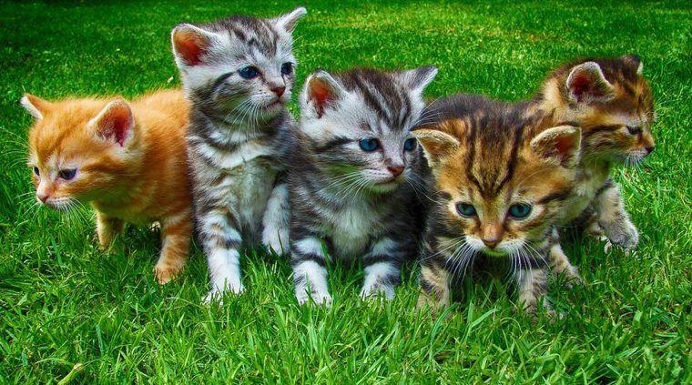 猫の飼い方|迎えるまでの準備や費用、注意点などについて紹介
