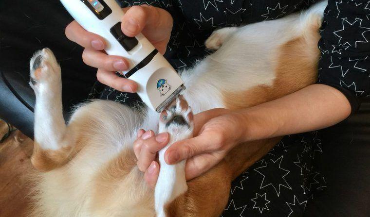犬用バリカンの使い方や注意点、おすすめ商品は?【プロが動画で解説】