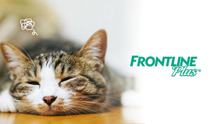 フロントライン プラスで犬も猫もノミ・マダニ駆除、予防の徹底を! 使い方や安全性を解説