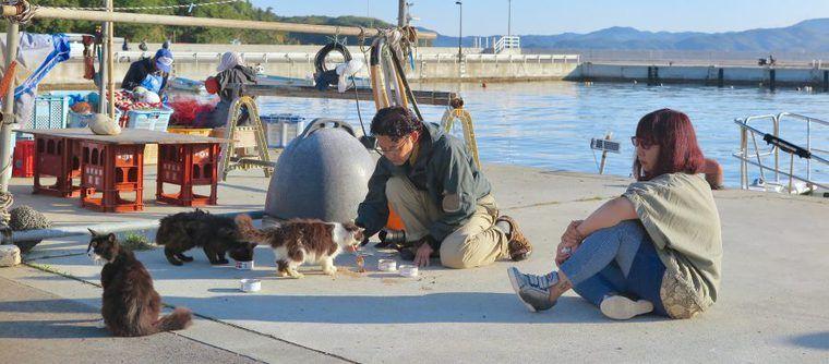 田代島で見た猫のボランティア診療 ドイツの獣医師が猫島に通う理由とは