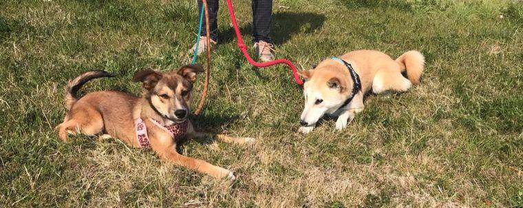 シェアハウスで犬助け!? 保護犬の預かりボランティアを支援する新しい取り組みがスタート