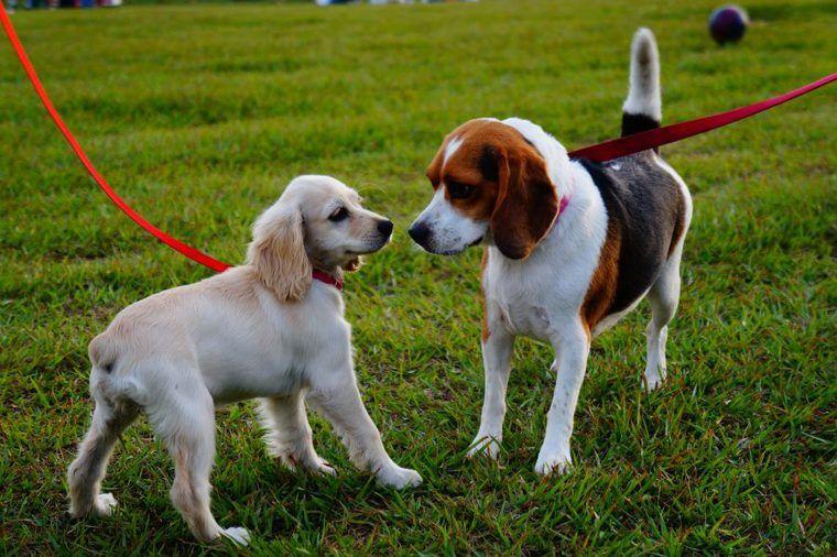 犬のバベシア症はマダニが原因? 症状や対策などを獣医師が解説