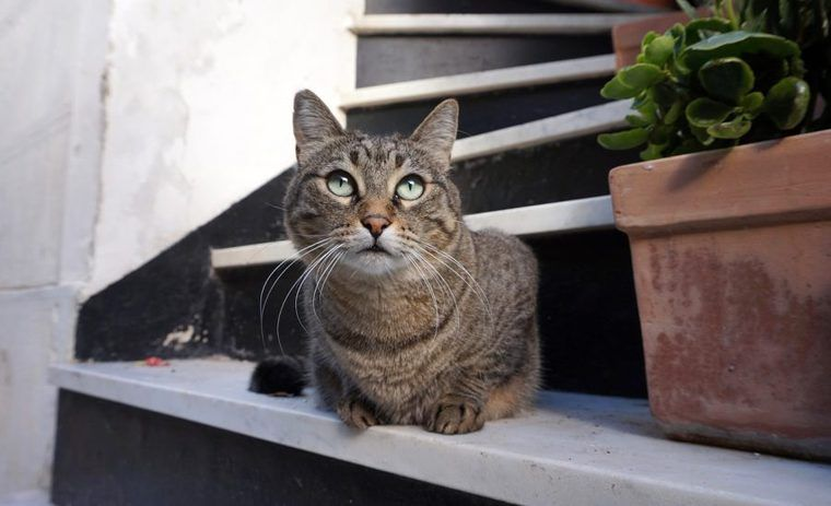 猫の胸水の症状や原因、治療法は?【循環器認定医が解説】