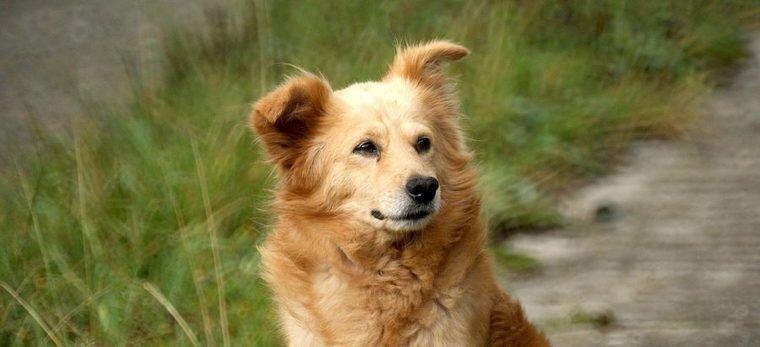 犬のアレルギーの種類や症状、対策、治療法など【皮膚科獣医師が解説】