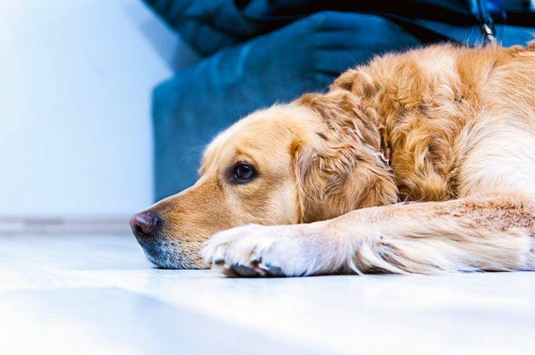 犬の床ずれは予防が大事 症状や治療・対処法、防止グッズを獣医師が解説