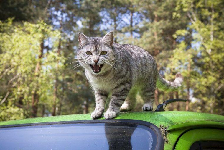 猫バンバンとは? 車に乗る前の新常識! 日産はかわいいステッカー配布中