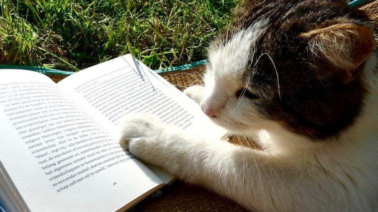 猫と本を楽しむ! 編集部おすすめの猫小説、写真集を紹介