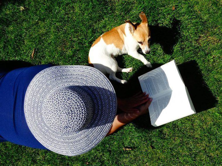 犬の本を読んでみよう! 編集部おすすめの感動的な小説、マンガを紹介