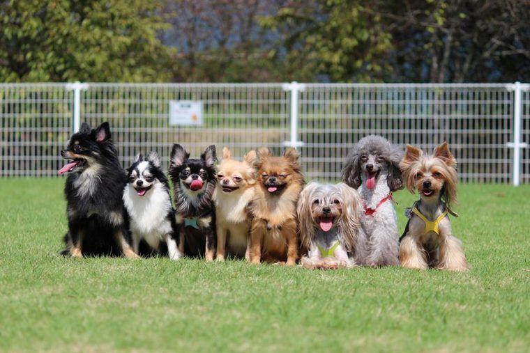 犬のブラッシングの頻度やコツ、道具、嫌がる場合のやり方【プロが解説】