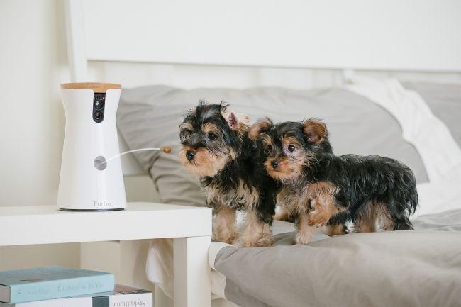ドッグカメラ「Furbo」の新型はAI搭載!? 犬を顔認識して異常を通知
