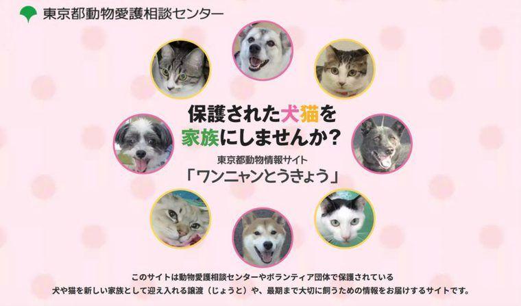 東京都が譲渡促進のための新サイト開設 小池都知事「大人の犬猫を家族に迎えませんか?」