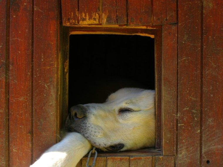 犬のハウスのしつけ方は? 教える意味、入らない時のしつけのポイントも