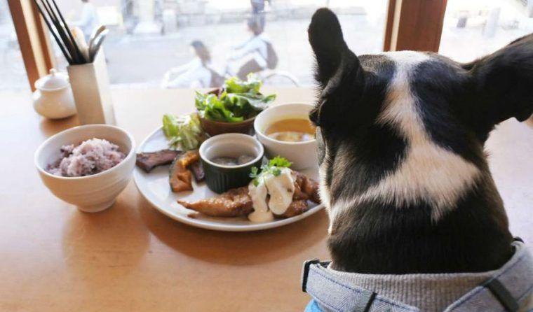 奈良のドッグカフェ&レストランおすすめ13選 看板犬との出会いも♪