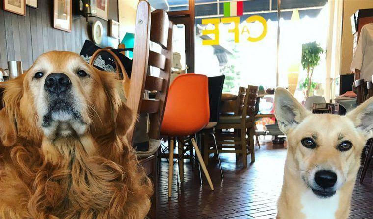 岡山のドッグカフェ&レストランおすすめ12選 店内ペットOKのお店もたくさん!