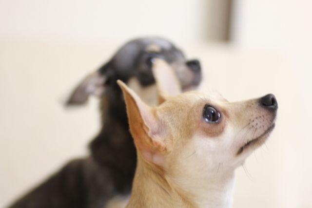 犬のしつけ教室の種類や効果について 通えば「いい子」になるは本当?