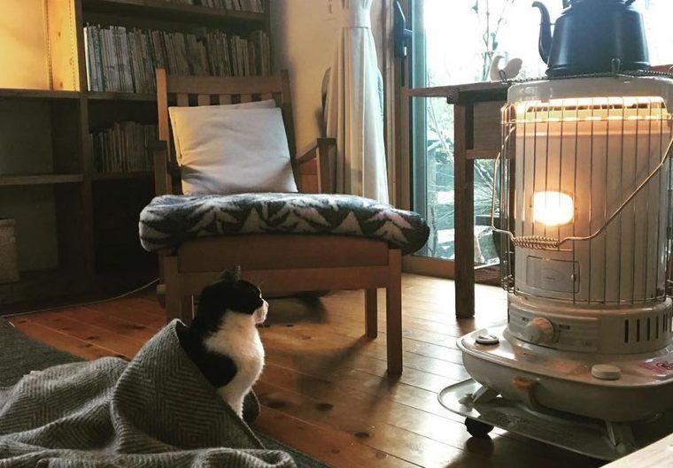 【猫との暮らし】ストーブに集まる猫たちの生活風景