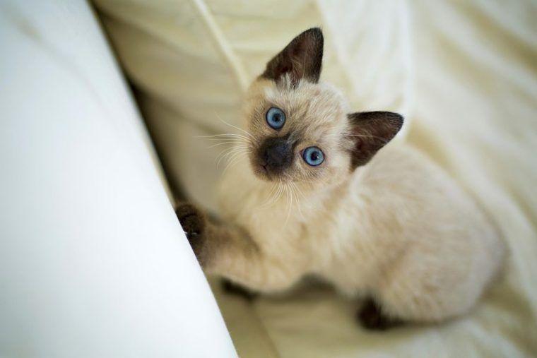 猫の気持ちは行動を見ればわかる|しっぽや耳から読み取るボディーランゲージ
